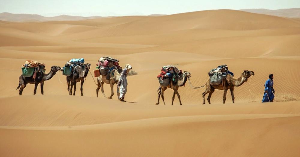 1589524018_caravane-nomade-sahraouie-avec-dromadaires-dans-le-desert-du-maroc-1.jpg