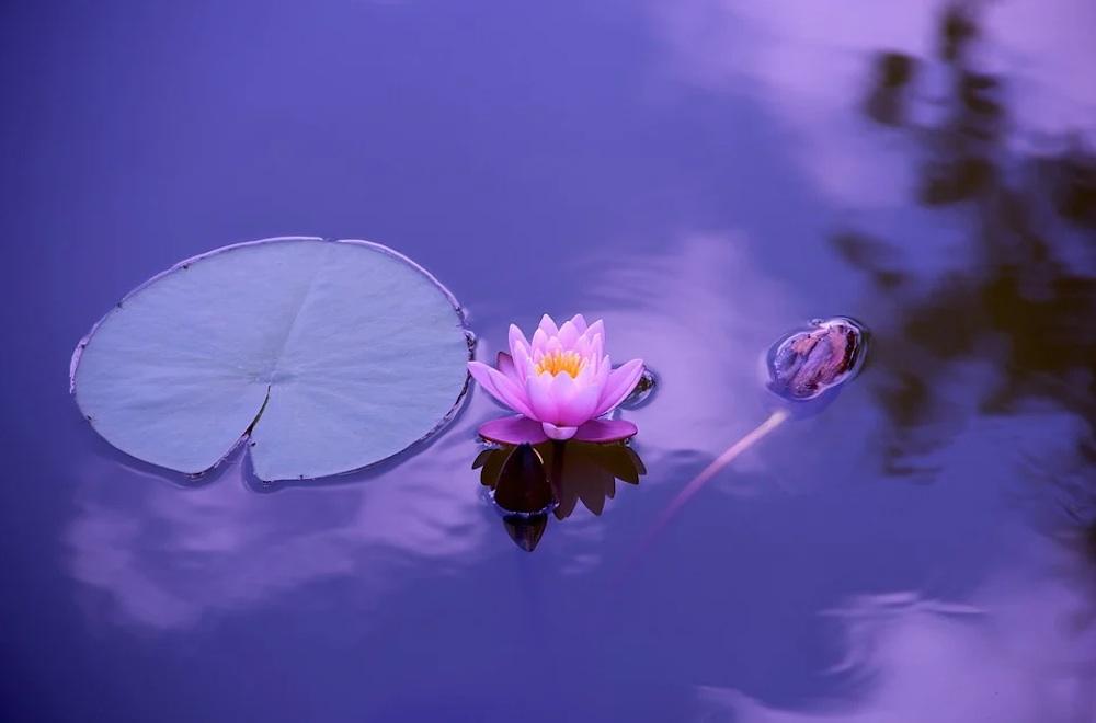 1594928801_lotus.jpg